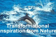 Transformational Inspiration from Nature / Using nature as my guide, I post short videos to help inspire transformed thoughts and actions from dark to light, down to up, depressed to joyful / by Martha Alderson, Plot Whisperer