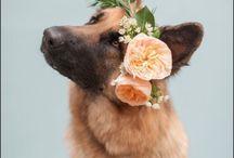 canine aesthetic