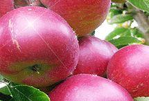FRUTAS Y VERDURAS / Las frutas y verduras contienen vitaminas y antioxidantes, muy buenas para la salud.