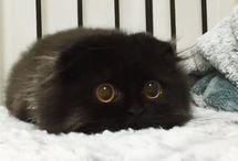 ネコ【Cat】