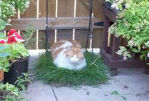 Pet friendly yard