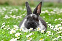 emergency fluffy bunny / by Julie Quimby