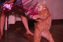 Critters / Cats / by Jesska Jones