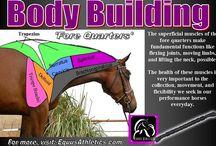 Equine bodywork techniques