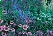 Garden Ideas for Full Sun