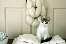 kitties / by Stephanie Houghlin