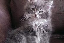 Antonia la Gata / gatos