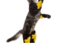 G-Form pads on #Cats / Cats don't always land on their feet. Sometimes they need a little extra impact protection!  / by G-Form