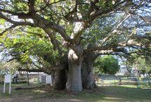 Barbados Natural History