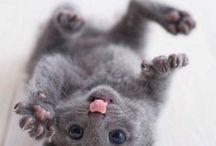 Kitten cute