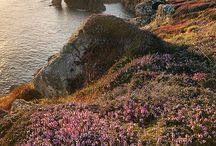 Landscapes | ArchiArtDesigns
