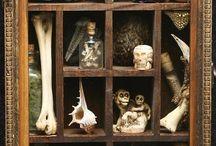 Cabinet of curiosities/Wunderkammer