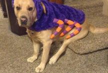 Dressed Up Dogs / From dapper to downright adorable, these dressed-up-pups have got it going on.