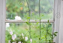 Indoor kitchen gardening / Innendørs kjøkken dyrking