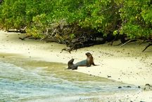 Galapagos Islands / Photos from a nature lovers paradise, the Galapagos Islands #Galapagos #GalapagosIslands