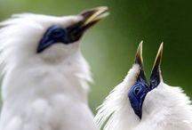 Pencegahan dan Perawatan 7 Penyakit Burung Jalak Agar Kembali Prima