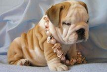 Cutest Animals EVER!!!
