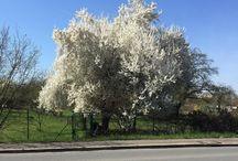 Frühling 2017 #weekend #spring #edingen #sunnyday #sunday