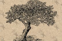 Tree Botanical Old Images