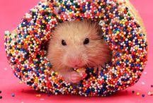 hamsters /  fotos de hamsters