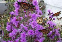 Wisconsin Garden Plants / Wisconsin has beautiful garden plants that can be grown throughout three seasons.