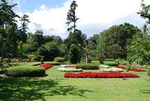 Gardens in the villas