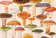 Mushrooms / Fungi