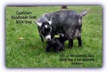 Gotta ❤️ Goats!! / Cute goats, babies and adults from our small urban farm venture! Have you hugged a goat today?