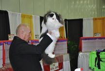 CFA Cat Shows / Check out the Action at your local CFA Cat Show / by Cat Fanciers Association