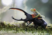 Insect and amphibians