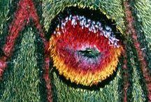 Natural forms close up