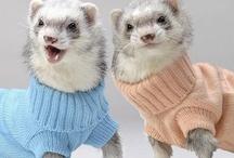 Ferrets! because I'm crazy / by Caity Thomas