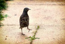 Birding shots !