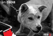 Social Campaign / Mijo Brands se une a la causa de miles de mascotas sin hogar.