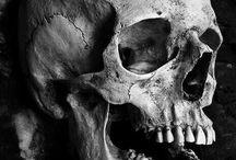 Skull Referance