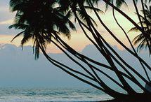 Sri Lanka... My Roots x / by Joanne Stanislous