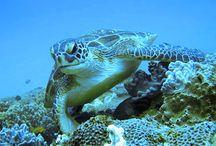Magnificent Marine Life