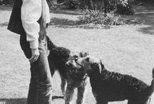 Airedale Terriers vintage