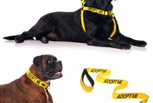ADOPT ME - I'm looking for a New Home / ADOPT ME - I'm Looking For A New Home!  Perfect for when you are out and about with your foster dog. The ADOPT ME range of products inform the public that a rescue dog is looking for a forever home.