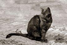 GATTI / Scatti fotografici dedicati ai gatti della Regione Marche - ITALIA Fotografie soggette a © Copyright realizzate per mostre fotografiche.