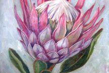 Protea skildery
