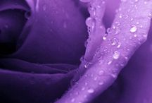 Purple Passion / by Kathy Ditty