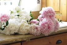 Peonies and other Flowers