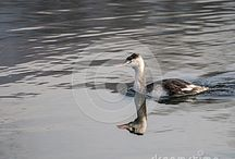 Birds and birdwatching on dreamstime / All these photos can be bought full size and with no watermark -  Follow the link