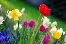Forår / Sommer 2015 / #forår #sommer #havemøbler #sol #haven