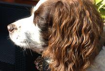 Suzie / My dog
