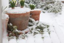 Winter garden~