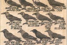 crows | ravens | blackbirds / by Kim Ramey