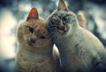 gatos gatos gatoss!!!
