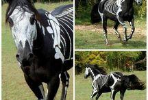 Horse idea